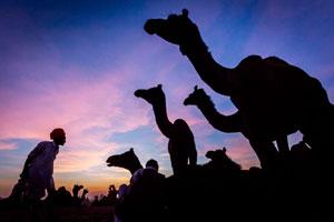 Rajasthan fotótúra galéria - saját képek